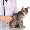 Ветеринарные клиники в Гавриловке Второй
